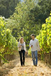 Man and woman walking in vineyardの写真素材 [FYI02954147]