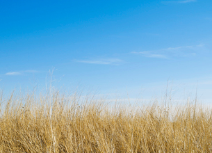 Dry Grassの写真素材 [FYI02954734]