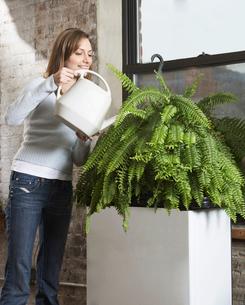 Woman Watering Houseplantの写真素材 [FYI02954868]