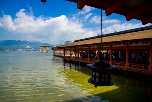 厳島神社 西廻廊と大鳥居の写真素材 [FYI02957599]