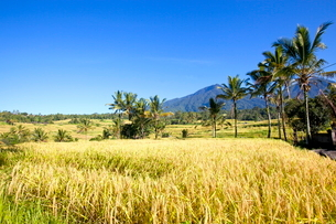 インドネシア バリ島 ジャティルウィライステラスの写真素材 [FYI02957717]