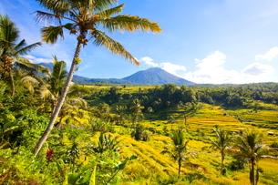 インドネシア バリ島 ジャティルウィライステラスの写真素材 [FYI02957725]