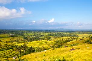 インドネシア バリ島 ジャティルウィライステラスの写真素材 [FYI02957740]