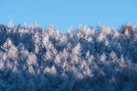 聖高原の雪景色の写真素材 [FYI02958133]