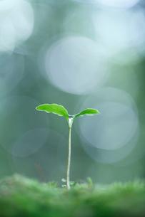 森の若芽の写真素材 [FYI02958154]