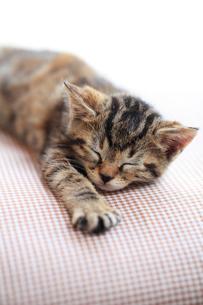 眠る子猫の写真素材 [FYI02958156]