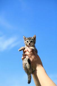 高く抱き上げられた子猫の写真素材 [FYI02958170]