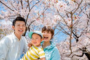 桜の咲く公園で遊ぶ3人家族の写真素材 [FYI02958191]