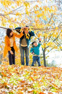 紅葉の公園で遊ぶ息子と両親の写真素材 [FYI02958192]