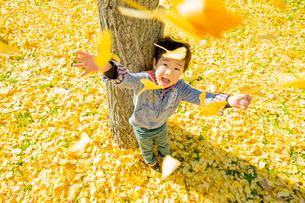 落葉の公園でイチョウの葉を投げる男の子の写真素材 [FYI02958214]
