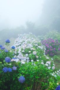 笠山観光農園あじさい園の写真素材 [FYI02958448]