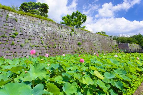 夏の鶴丸城跡の写真素材 [FYI02958481]