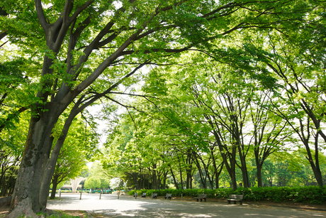 赤塚公園の写真素材 [FYI02958491]