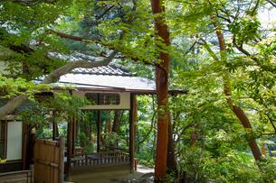 殿ヶ谷戸庭園の春の風景の写真素材 [FYI02958509]