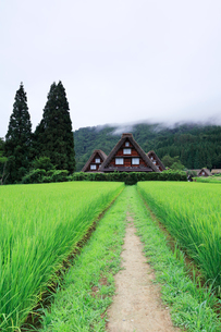 夏の白川郷・合掌造り集落に山霧の写真素材 [FYI02958528]