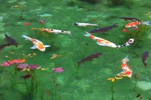 モネが描いた絵のような池の写真素材 [FYI02958529]