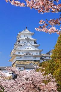 快晴の空と姫路城にサクラの写真素材 [FYI02958531]