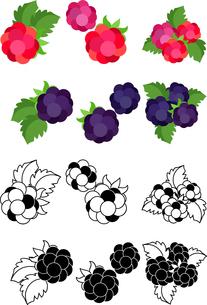 ラズベリーとブラックベリーの可愛いアイコンのイラスト素材 [FYI02958533]