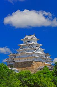 姫路城に緑の木立の写真素材 [FYI02958536]