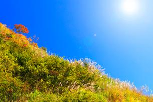 ススキに紅葉と空に太陽の写真素材 [FYI02958538]