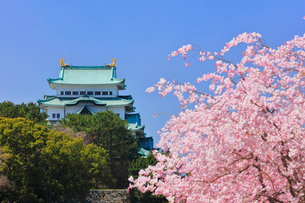 春の名古屋城の写真素材 [FYI02958564]