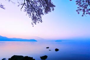 海津大崎の桜 朝焼けの琵琶湖に竹生島の写真素材 [FYI02958570]
