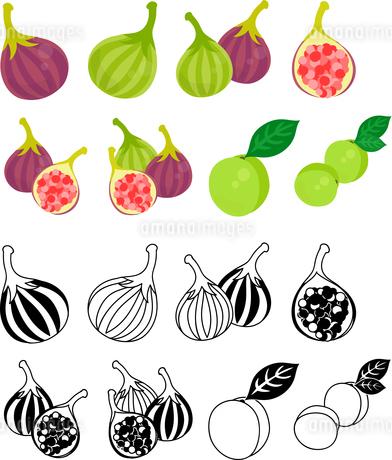 イチジクと梅の可愛いアイコンのイラスト素材 [FYI02958571]