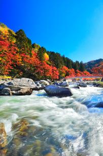 香嵐渓 紅葉と巴川に待月橋の写真素材 [FYI02958588]