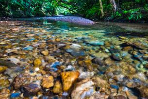 やんばるの川の写真素材 [FYI02958640]