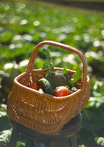 穫れたて有機野菜の写真素材 [FYI02959089]