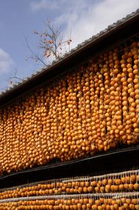 干し柿の写真素材 [FYI02960023]