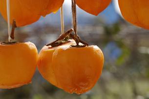干し柿の写真素材 [FYI02960030]
