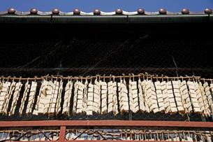 凍み豆腐作りの写真素材 [FYI02960256]
