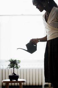 Woman watering bonsai treeの写真素材 [FYI02960259]