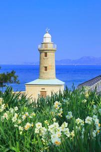 男木島灯台と水仙に瀬戸内海の写真素材 [FYI02960721]