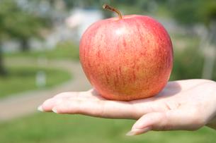 リンゴを持った女性の手元の写真素材 [FYI02961327]