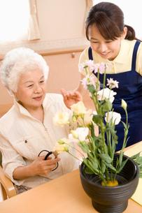 花を活けるシニア女性の写真素材 [FYI02961516]