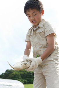 大根を手に持った男の子の写真素材 [FYI02963763]