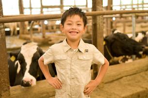 牛の前に立つ男の子の写真素材 [FYI02963887]