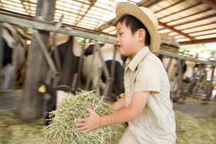 干し草を持って走る男の子の写真素材 [FYI02964114]