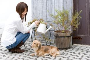 水遣りをする女性と犬の写真素材 [FYI02964742]