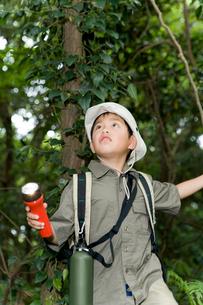 森の中で探検している男の子の写真素材 [FYI02964752]
