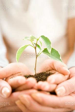 苗木を抱える親子の写真素材 [FYI02965318]