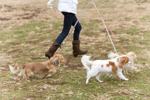 走る犬と女性の写真素材 [FYI02965382]