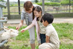 ヤギにエサを与える親子の写真素材 [FYI02966020]