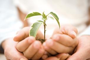植物を持つ親子の手の写真素材 [FYI02966072]