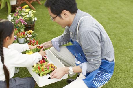 庭に花を飾る父と娘の写真素材 [FYI02967221]