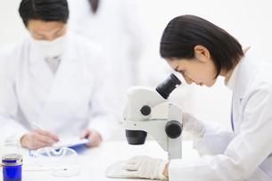 顕微鏡を覗く女性研究員の横顔の写真素材 [FYI02967264]