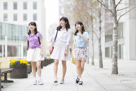 キャンパスを並んで話しながら歩く女子学生たちの写真素材 [FYI02967323]