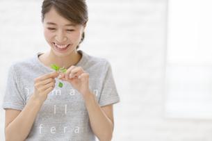 キッチンでミントを千切る笑顔の女性の写真素材 [FYI02967596]